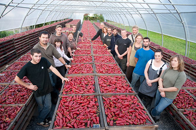 Equipe du Producteur de Piment d'Espelette: Vincent Darritchon